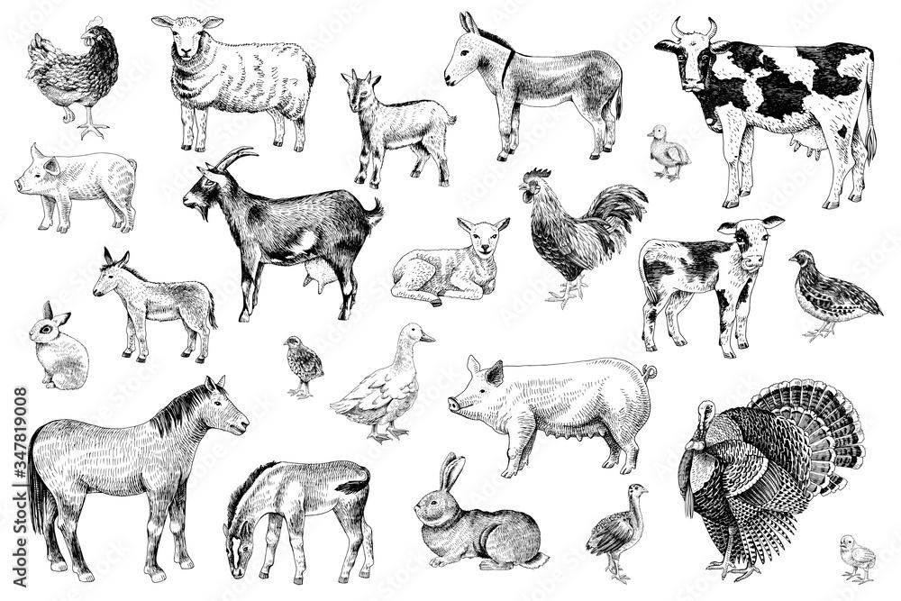 Fototapeta Large set of farm animals with their babies