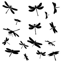 Vector, Isolated, Dragonfly Si...