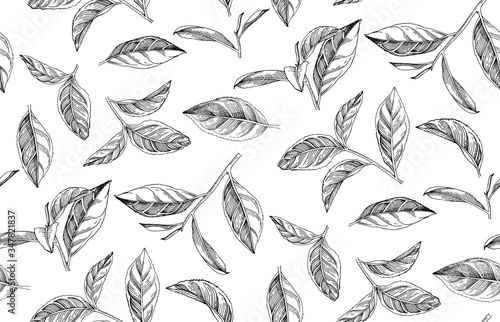 Obraz Seamless pattern with hand drawn tea leaves and branches - fototapety do salonu