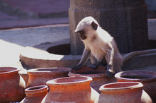 This Little Monkey Was Thirsty...