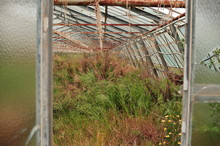 View Of Abandoned Greenhouse