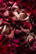 Red Rose Petals Close Up With ...