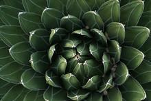 Fractal Cactus Energy Peaceful Green