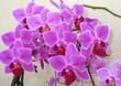 canvas print picture - Close-up Of Purple Orchids