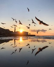 Many Flying Seagulls At Amazin...