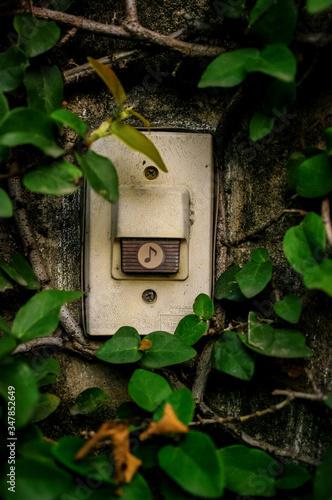 Fototapeta Close-up Of Doorbell Amidst Creepers