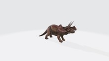 3d Illustration Of Triceraptor. Dinosaur Triceraptor Isolated