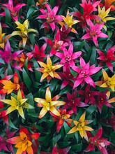 Full Frame Shot Of Multi Colored Flowers Blooming Outdoors