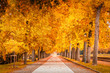 Trees during the autumn in Lucca, Tuscany, Italy