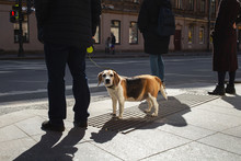 A Dog On A Leash Stands At An ...