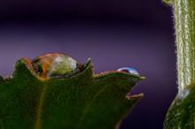 Krople Wody Na Kwiatkach Makro Koolorowe