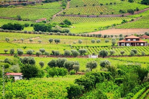 plakat Portugal wine land