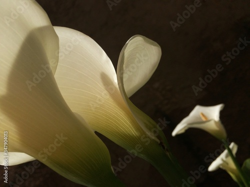 Valokuvatapetti Close-up Of Calla Lily Blooming In Park At Night