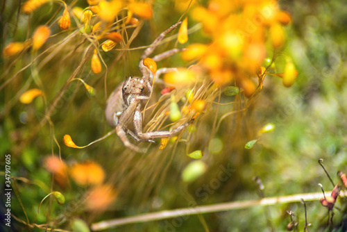 Photo big spider crab in yellow moss