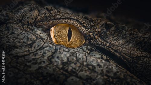 Photo Nile Crocodile Eye