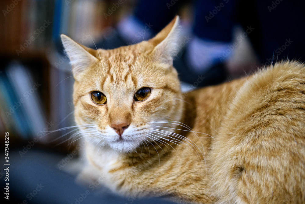 Fototapeta Gato, animal felino, foto de alto contraste