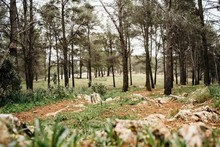 Thin Trees And Green Grass Growing On Stony Ground On Clearing In Calm Forest