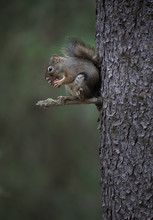 Adorable Furry Squirrel Hangin...