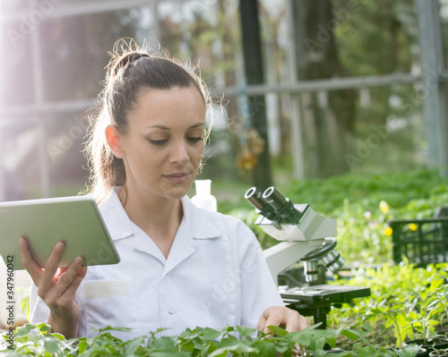 Fototapeta Woman agronomist with tablet and microscope in greenhouse obraz