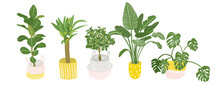 Potted Plants Collection. Succ...