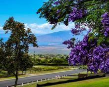Kula Maui Park