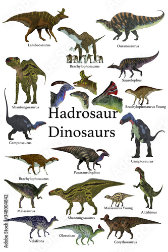 Hadrosaur Dinosaurs - This is a collection of ornithopod herbivorous Hadrosaur dinosaurs who have a duck-bill with some of them with a cranial crest. Wall mural