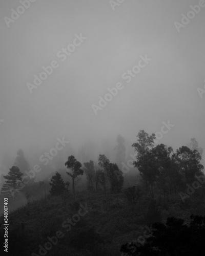 nevoeiro Canvas Print