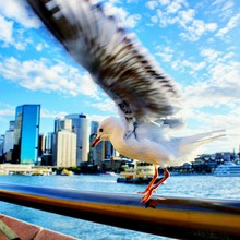 Close-up Of Seagull Landing On Railing Against Sea
