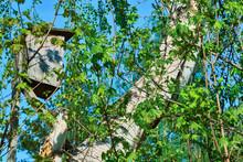 Birdhouse On A Tree, Blue Sky,...