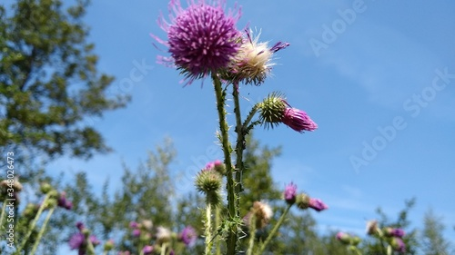 Low Angle View Of Pink Flowering Plant Against Sky Canvas Print