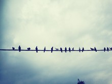 Birds Perching On Wire Against Cloudy Sky