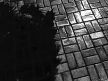 Shadow Of Tree On Footpath