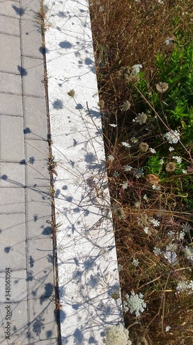Fototapety, obrazy: High Angle View Of Plants Growing By Footpath