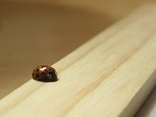 Close-up Of Ladybug On Wooden Plank