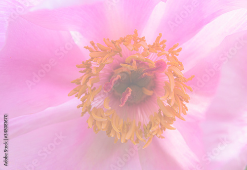 Photo Pink flower with yellow anthers