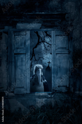 Photo Lesser adjutant stork bird standing in old damaged wood window with wall over cr