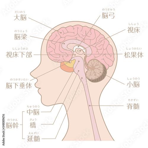 Fotografia, Obraz 人間の体_脳_文字あり