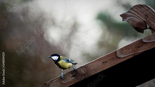 Stampa su Tela Close-up Of Songbird Perching On Wood