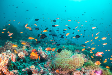 Fototapeta na wymiar Colorful coral reef surrounded by tropical schools of small fish in clear blue water