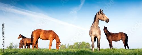 Fotografía young horses under blue sky in green grassy meadow