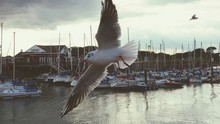 Seagull Flying Over Boats Moored At River