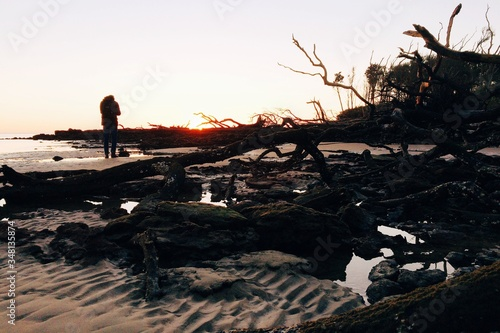Dead Trees Washed Ashore Canvas Print