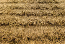 Backdrop With Thatched Roof De...