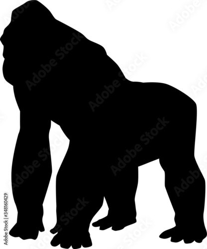 Vector silhouette of a giant gorilla ape Canvas Print