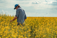 Farmer In Blooming Canola Field