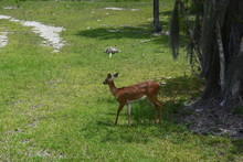 An Animal Standing On A Lush Green Fieldundefined
