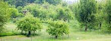 Stork On Nest In Summer Orchar...