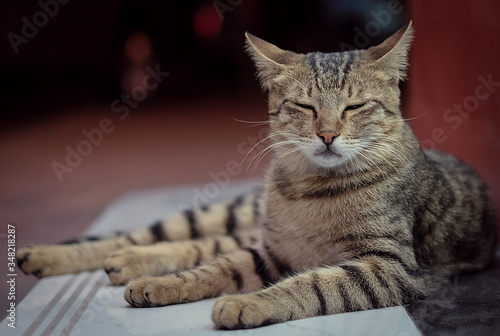 Fotografia Close-up Of Tabby Lying On Table