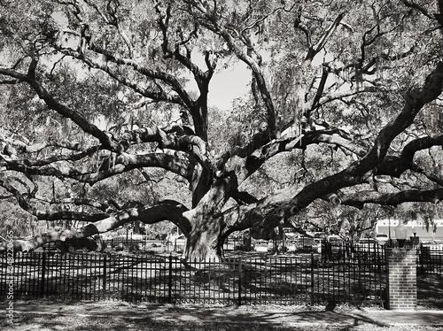 Fototapeta Large Tree On Meadow obraz
