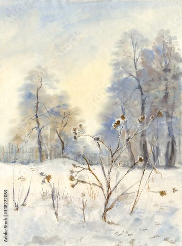 Photo Watercolor sketch: Agrimony in hoarfrost